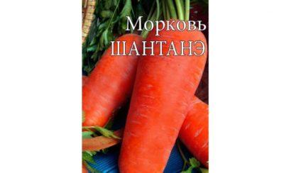 Подзимние сорта моркови для средней полосы