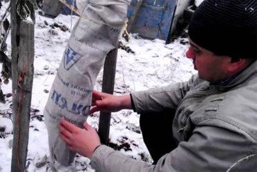 Подготовка молодых саженцев к зиме