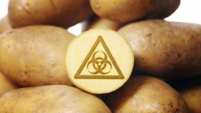 Генномодифицированные сорта картофеля в России