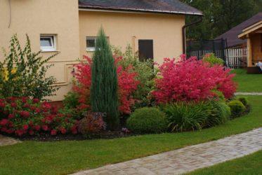 Какие кустарники можно посадить на даче?