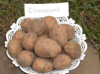 Новые сорта картофеля для Сибири