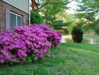 Самые красивые кустарники для средней полосы