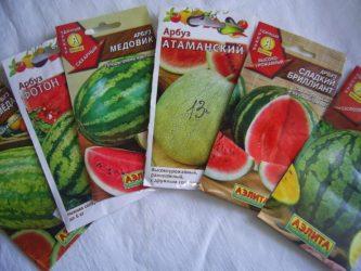 Сорта арбузов для Сибири в открытом грунте - Сад и огород