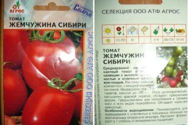 Томат жемчужина Сибири характеристика и описание сорта