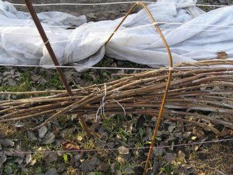 Укрытие малины на зиму в Сибири