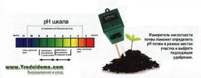 Как проверить кислотность почвы на даче?