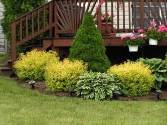 Какие декоративные деревья посадить на даче?
