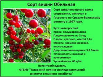 Низкорослые сорта вишни для средней полосы